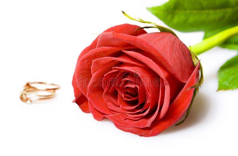 czerwona róża złote pierścienie ślub zdjęcie royalty free