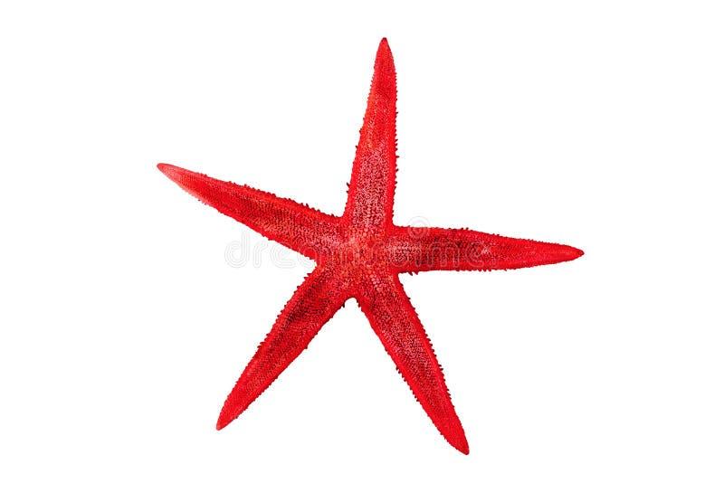 Czerwona rozgwiazda na białym tle fotografia stock