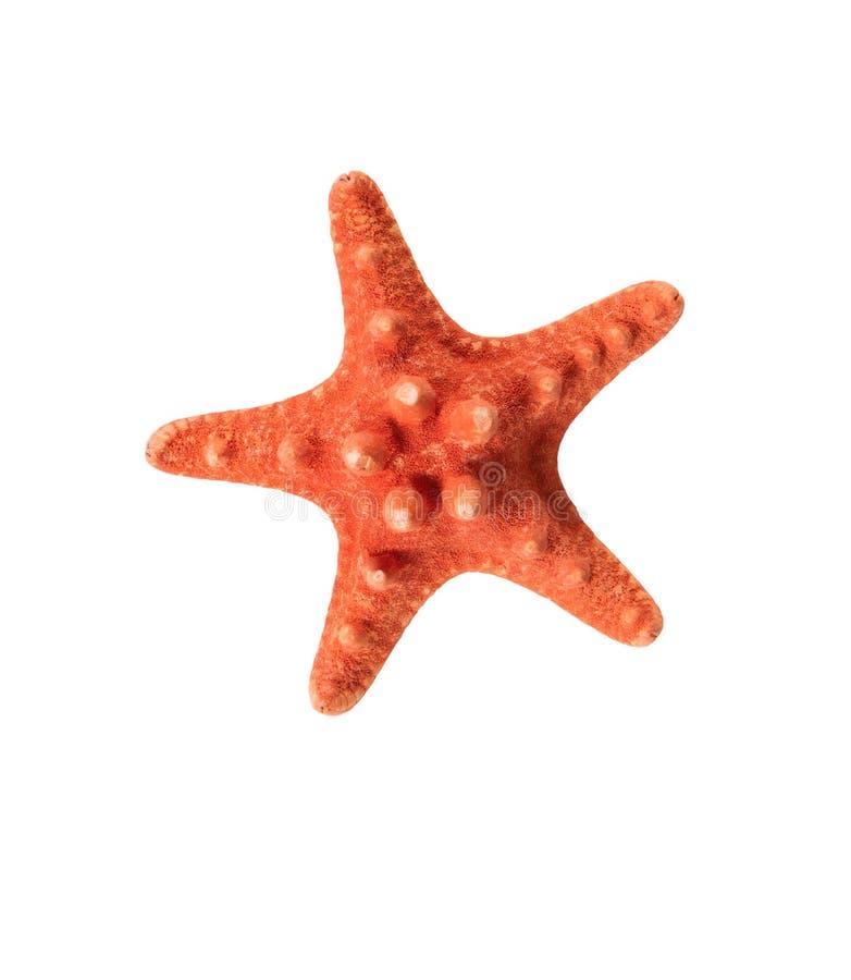 Czerwona rozgwiazda odizolowywająca na białym tle fotografia stock