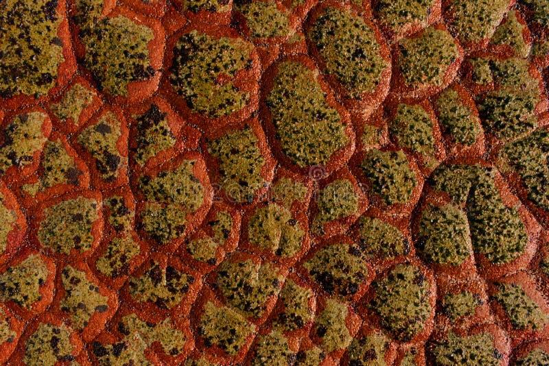 Czerwona smok skali skały tekstura zdjęcie royalty free