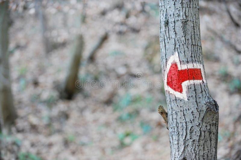 Czerwona strzała wycieczkuje znaka na drzewie zdjęcia stock