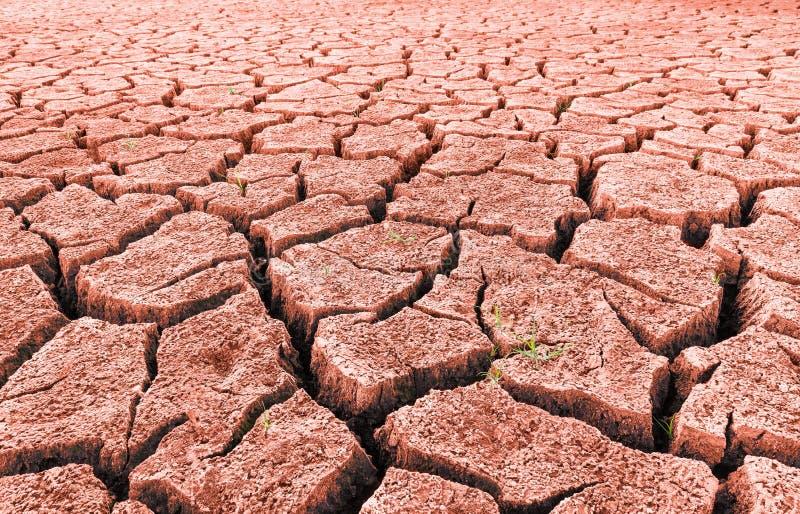 Czerwona sucha pustynia z kiełkować trawy i pęknięć zdjęcie royalty free