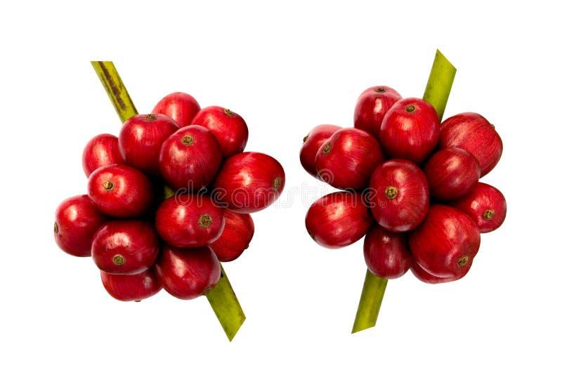 Czerwone świeże kawowe fasole odizolowywać na białym tle, ścinek ścieżka zdjęcia royalty free