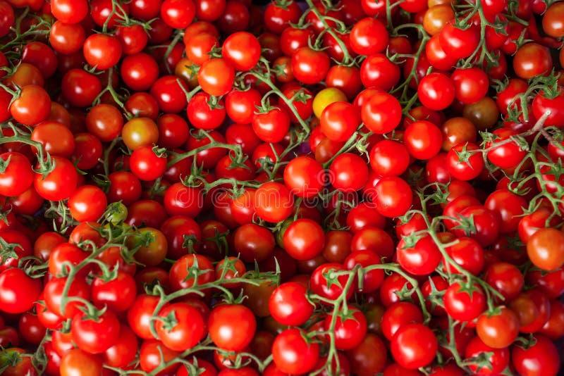 czerwone świeżych pomidorów kolorowe tło zdjęcie stock