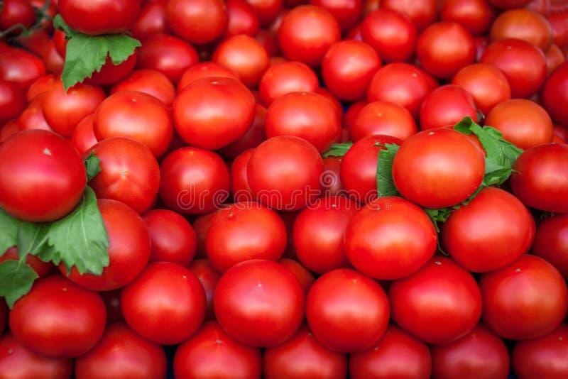 czerwone świeżych pomidorów kolorowe tło obraz royalty free