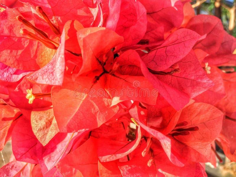 czerwone obrazy stock