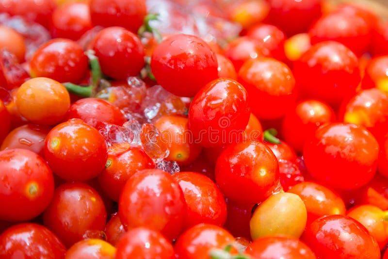 czerwone czere?niowej pomidor obrazy royalty free