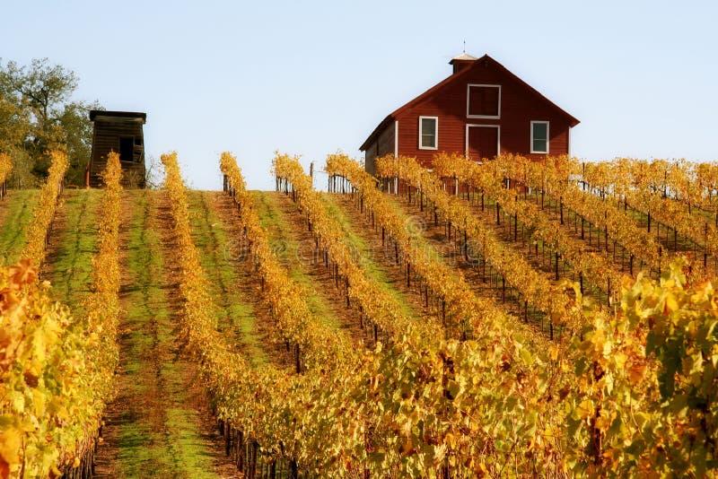 czerwone gronowi stodoły jesienią winorośli obrazy stock