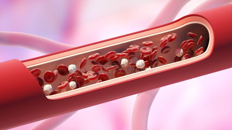 Czerwone i białe komórki krwi w żyle Leukocyte normalna równy ilustracja wektor
