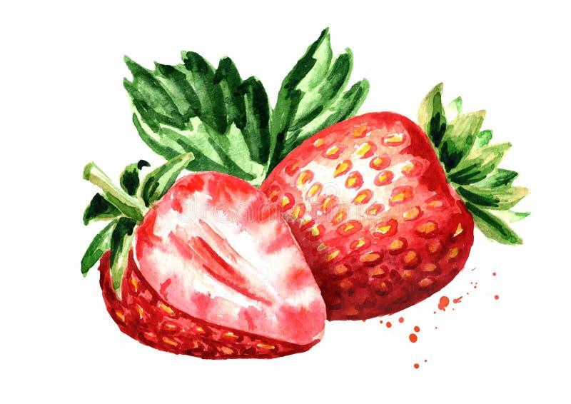 Czerwone jagody truskawkowe Akwareli ręka rysująca ilustracja odizolowywająca na białym tle royalty ilustracja