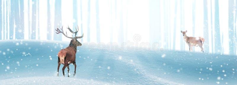 Czerwone jelenie w zimowym lesie magii w promieniach światła Fantastyczny baner świąteczny Wolne miejsce na tekst Dziki zimowe obraz stock