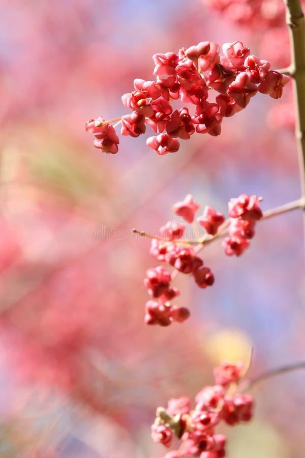 czerwone jesień jagody zdjęcie stock
