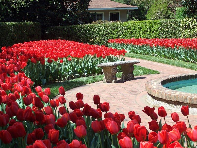 czerwone kanap tulipany zdjęcia stock