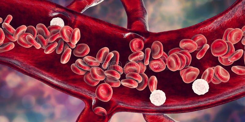 Czerwone komórki krwi i leukocytes, przekrój poprzeczny naczynie krwionośne ilustracji