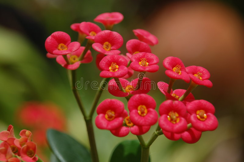 czerwone kwiaty fotografia stock