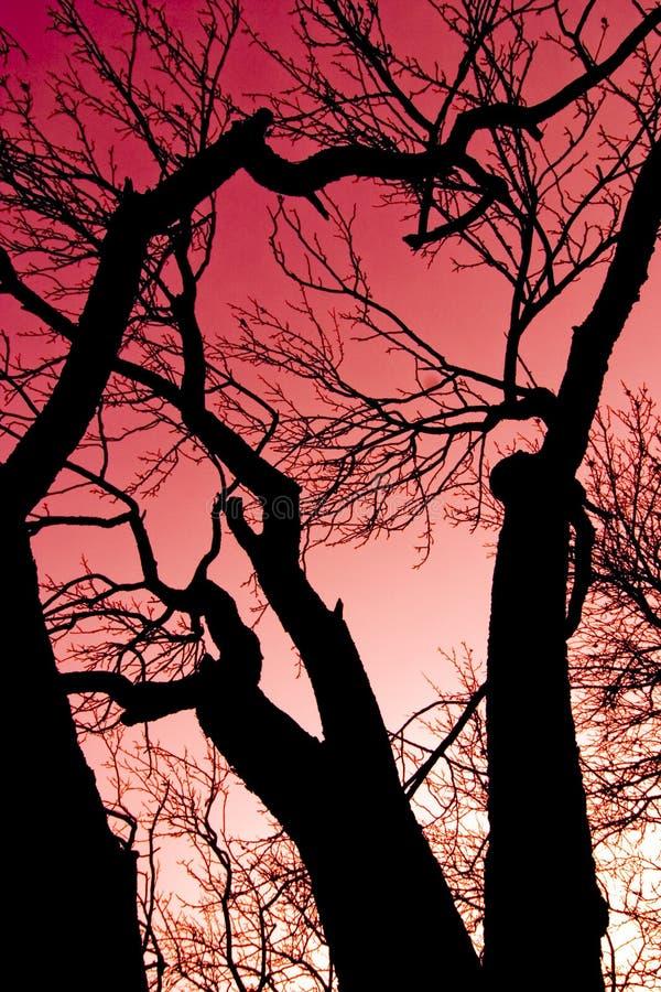 czerwone niebo drzewo fotografia stock