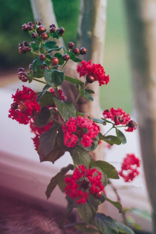 czerwone płatki fotografia stock