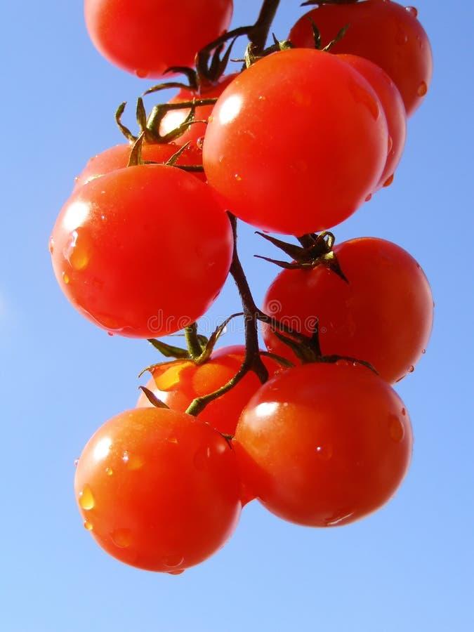 czerwone pomidorów fotografia stock