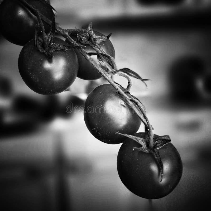 Download Czerwone Pomidorów Artystyczny Spojrzenie W Czarny I Biały Obraz Stock - Obraz złożonej z żywienioniowy, artystyczny: 53783249