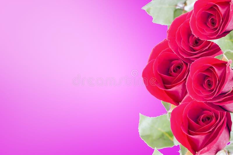 Czerwone róże łączą w bukiet, jako grupa Na pastelowych menchii tle Tam jest astronautyczny dla pisać fotografia royalty free