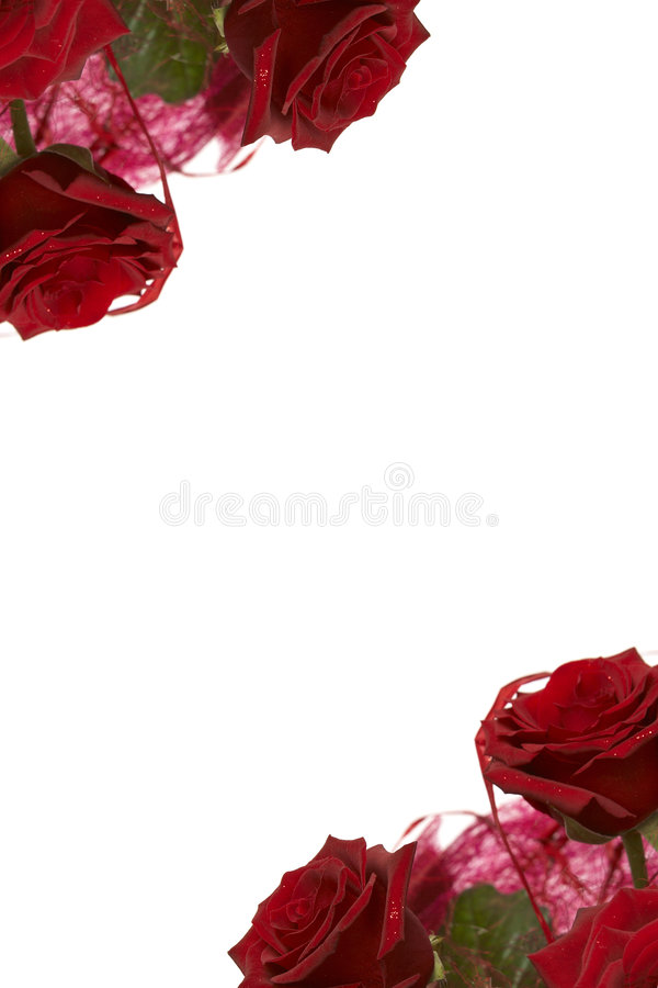 czerwone róże fotografia stock
