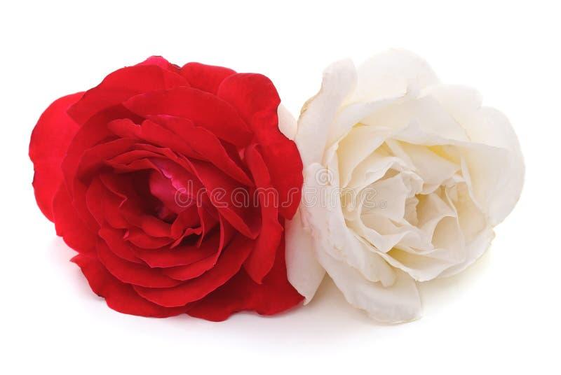 czerwone róże białe obrazy stock