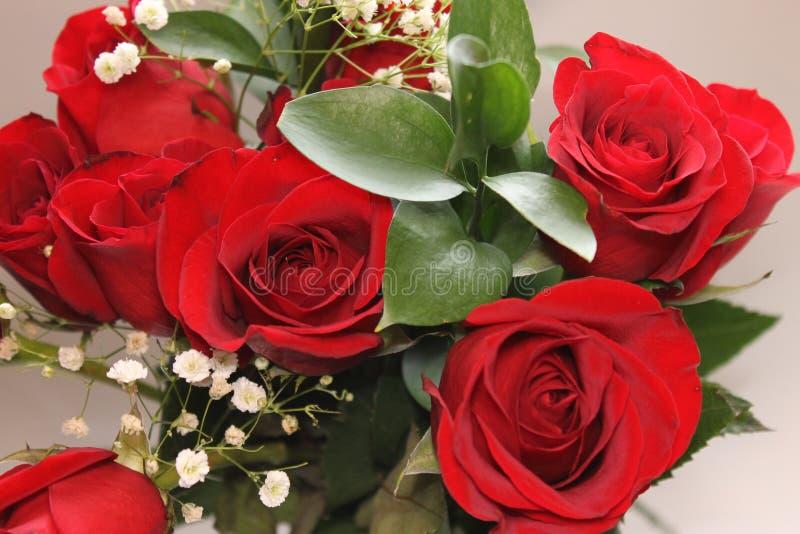 Czerwone róże i zieleń liście zdjęcia stock