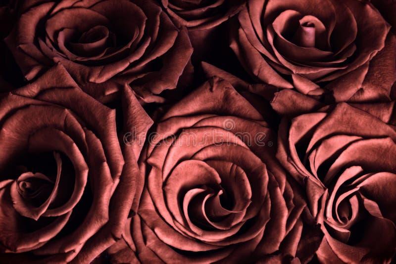 czerwone róże się blisko zdjęcie stock
