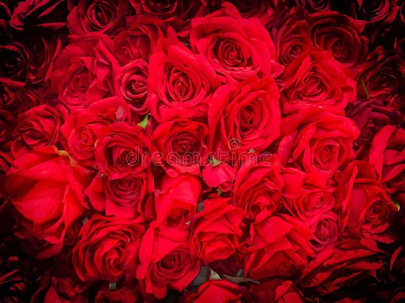 czerwone r??e zdjęcia royalty free