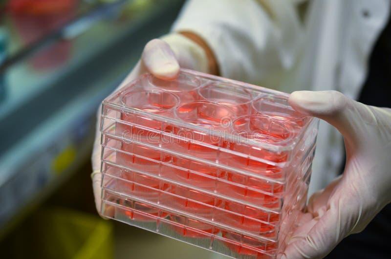 Czerwone serum próbki zdjęcie stock