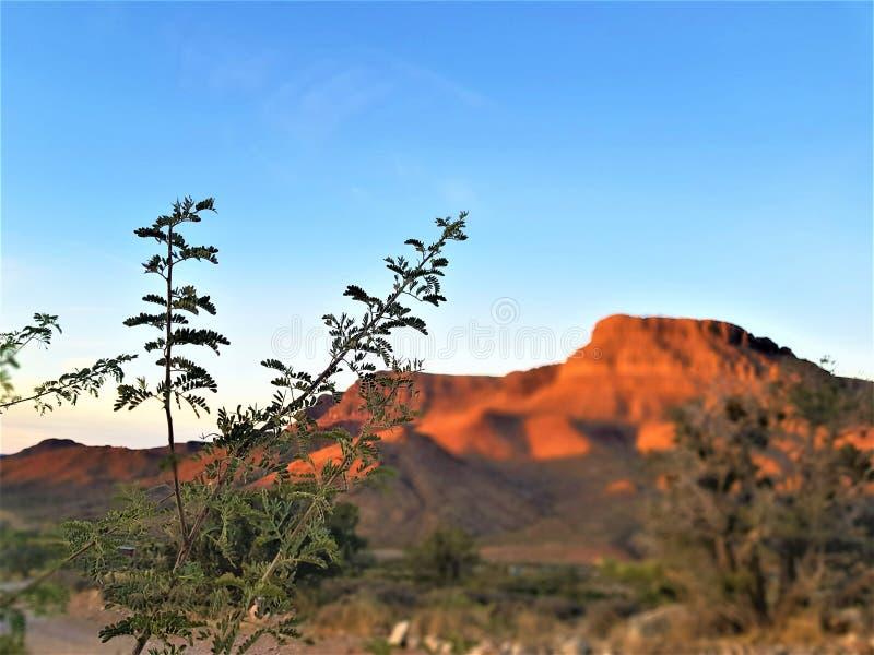 Czerwone skały uroczysty jar, Arizona usa obraz royalty free