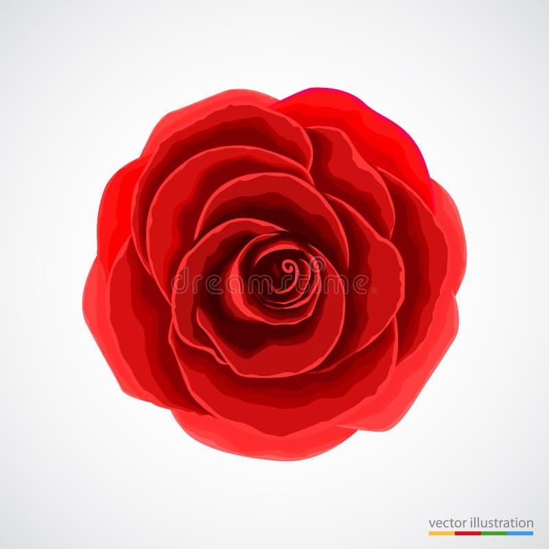 czerwone tło białe róże royalty ilustracja