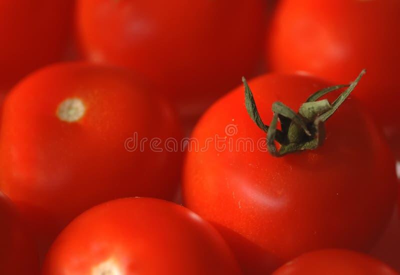 czerwone tło pomidorów obrazy royalty free