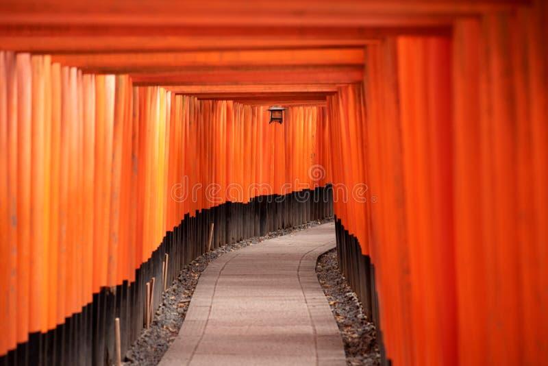 Czerwone Torii bramy w Fushimi Inari świątyni obrazy stock