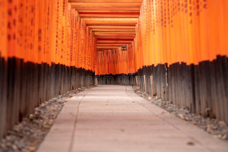Czerwone Torii bramy w Fushimi Inari ?wi?tyni zdjęcie royalty free