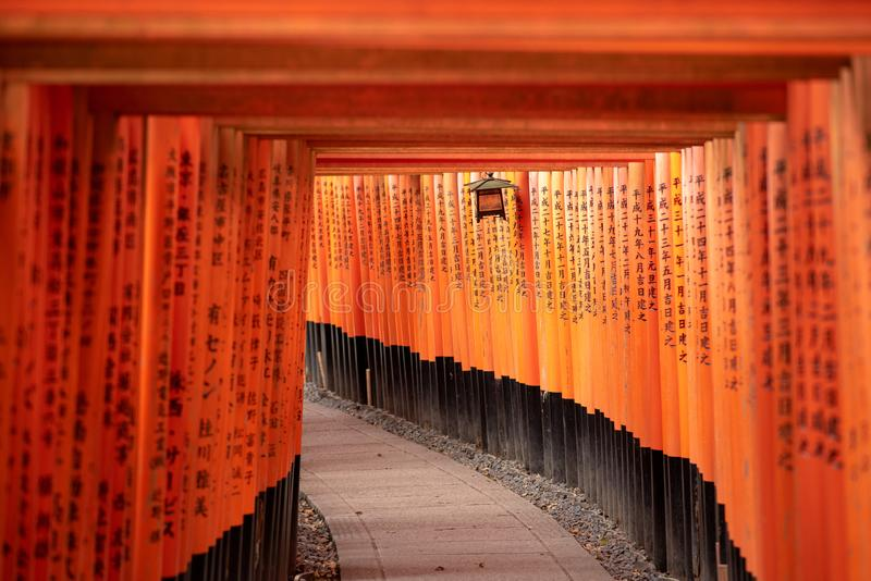 Czerwone Torii bramy w Fushimi Inari ?wi?tyni obraz royalty free