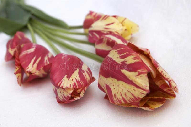 czerwone tupils żółte fotografia stock