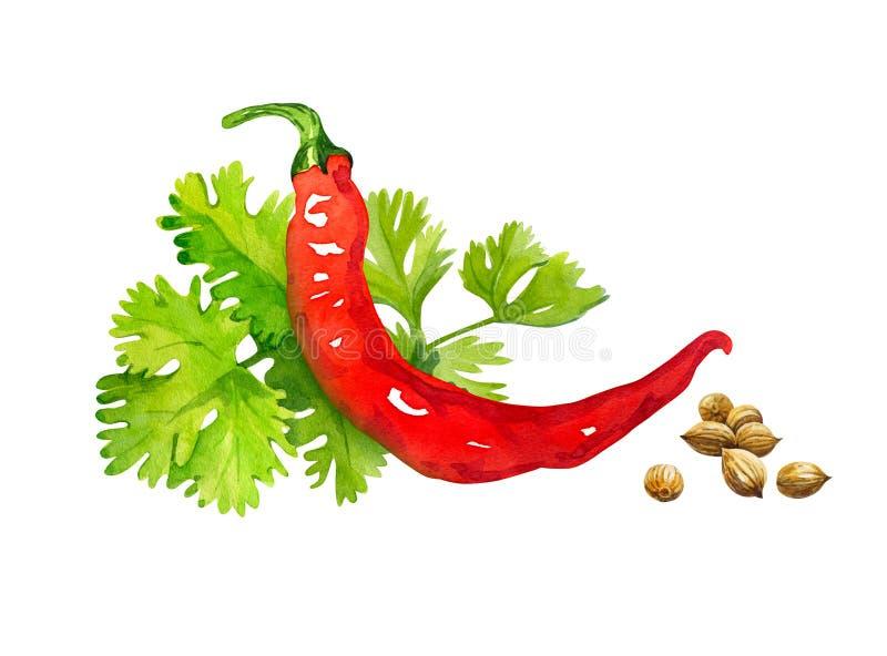 Czerwonego chili pieprz z kolenderami opuszcza na białej akwareli ilustraci i ziarna odizolowywający ilustracji