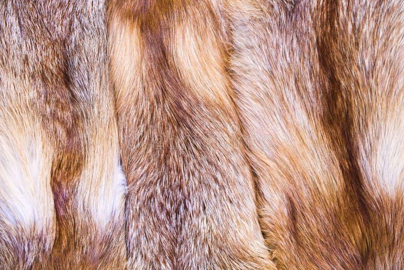 Czerwonego lisa skóra Fox futerko z pied pięknymi hairs obraz royalty free