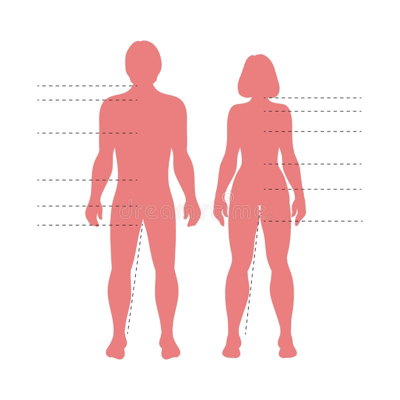 Czerwonego mężczyzna i kobiety ciała sylwetki z pointerami Wektorowe istot ludzkich postacie dla mody, medycznej lub nauki potrze ilustracji
