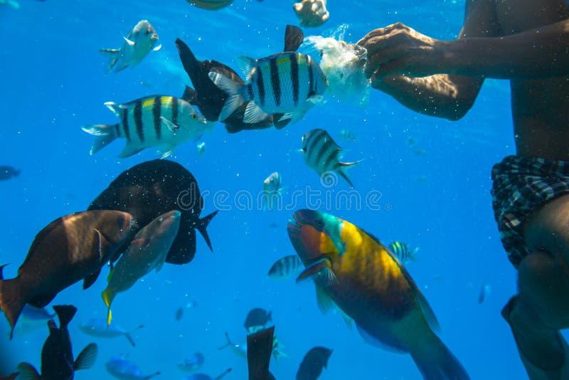 Czerwonego morza podwodna sceneria z tropikalnymi rybami obraz stock