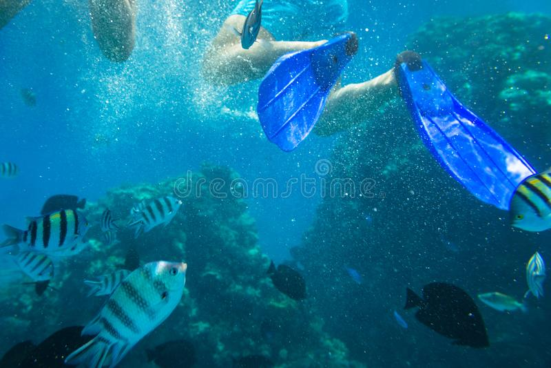 Czerwonego morza podwodna sceneria z tropikalnymi rybami fotografia stock