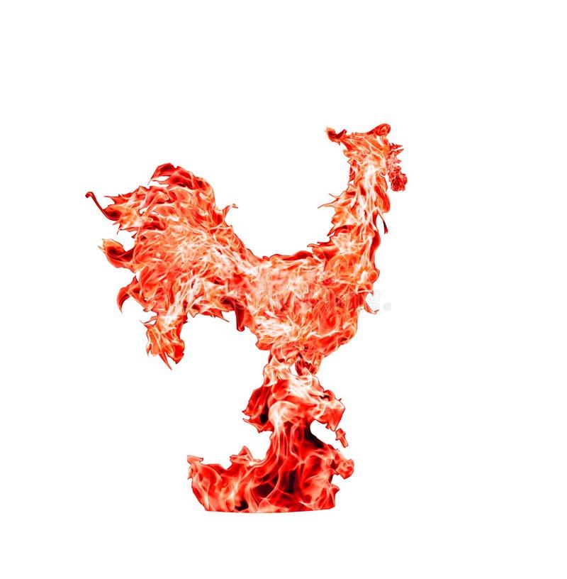 Czerwonego ogienia kogut, symbol nowi 2017 rok Fotografia kolaż czerwony płomień, odosobniony na białym tle zdjęcie royalty free