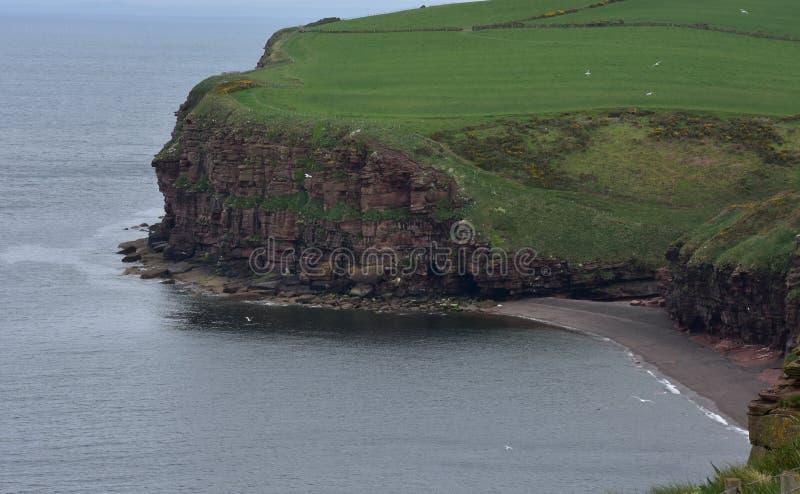 Czerwonego piaskowa Denne falezy Nad Fleswick zatoka w Anglia obrazy stock