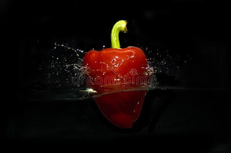 Czerwonego pieprzu pluśnięcia Pracowniany zbiornik zdjęcia stock