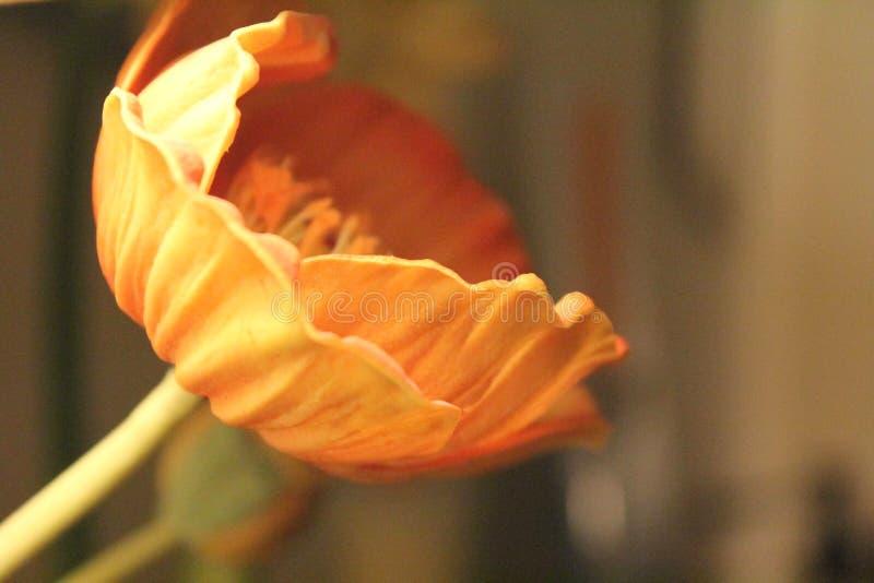 Czerwonego Pomarańczowego koloru żółtego koloru sztuczny kwiat z plamy tłem fotografia royalty free