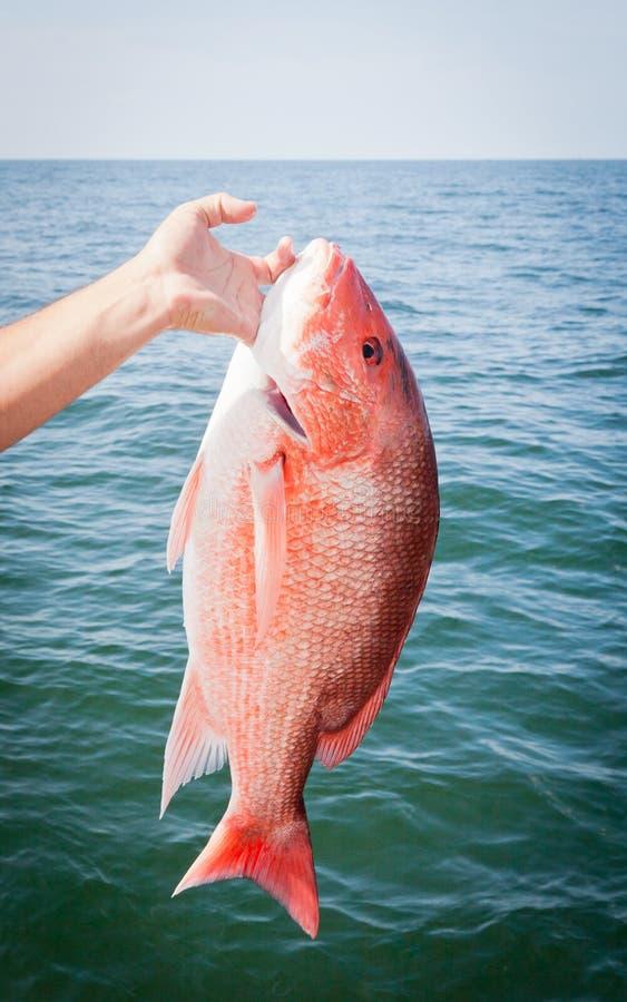 czerwonego snapperu TARGET2232_1_ na morzu sport zdjęcia stock