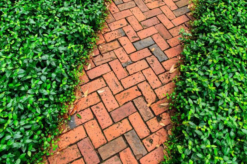 Czerwonej cegły droga przemian w ogródzie fotografia royalty free