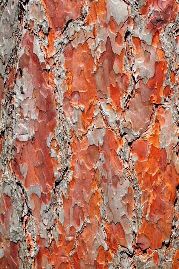 Czerwonej sosny barkentyny tło zdjęcie stock