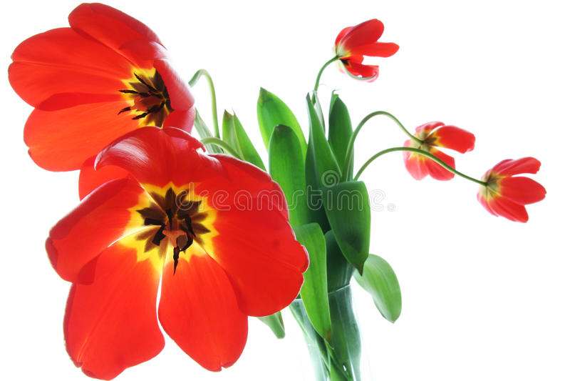 czerwonej wiosna tulipany wazowi obraz stock